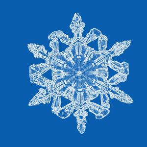 Bentley Snowflakes